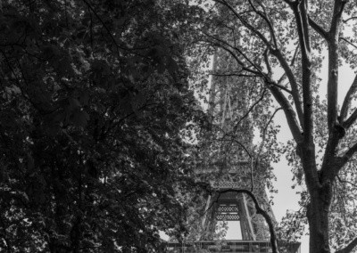 Photos shows the Eiffel Tower dwarfing the nearby tall trees.