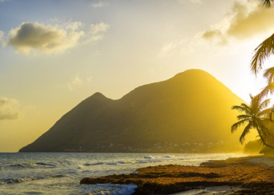 Photo shows the sun backlogging coconut trees and a mountain rising from the ocean beyond the yellow sun drenched beach on the island of Martinique.
