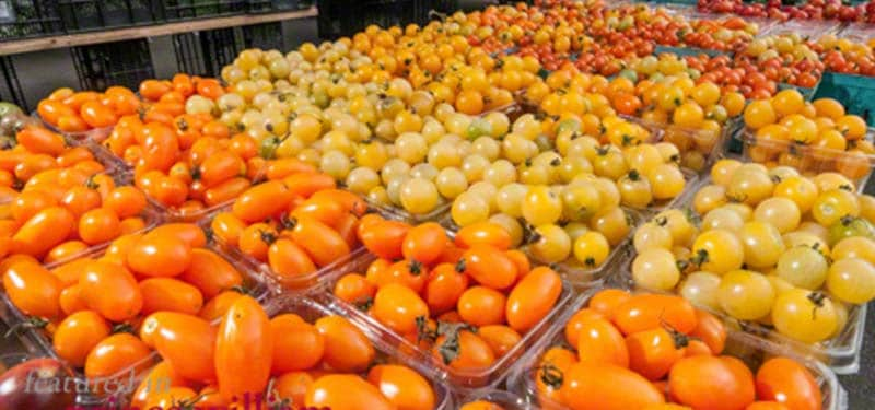 Photo shows orange, yellow, and red tomatoes in bins at the Dale City Farmers Market